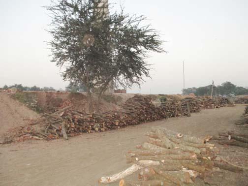 tree-pic-jhenaidah-5